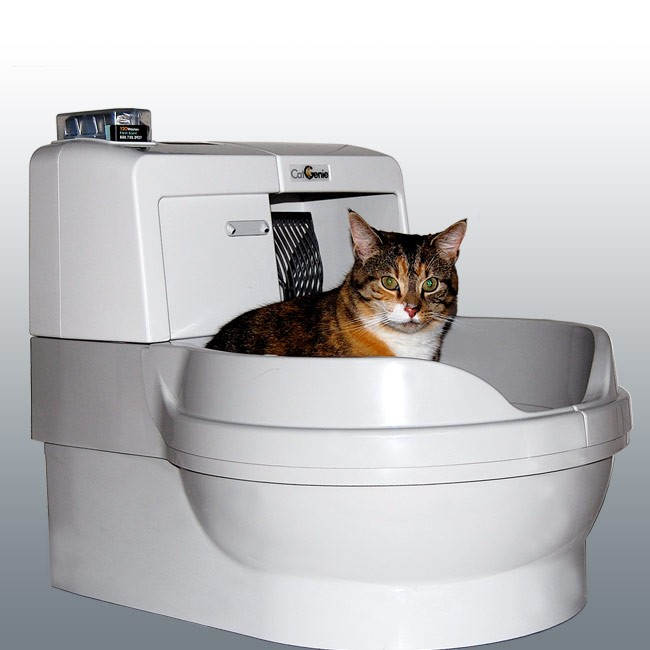 changing cat litter locations